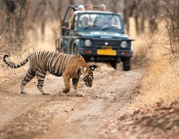 Golden Triangle with Ranthambore (wildlife)